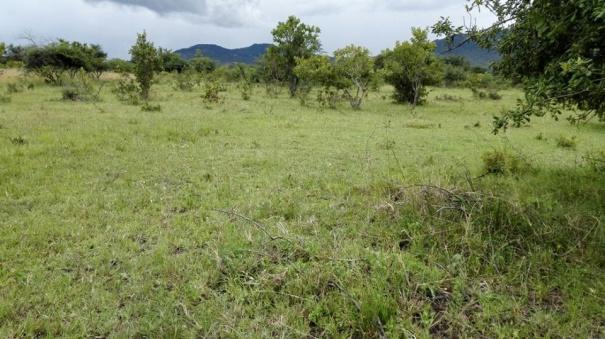 Shamba La Kupanda Miti Ya Mbao Ama Nguzo linauzwa, Mufindi, Iringa. Shamba Lina ukubwa wa ekari 50. Kila ekari inauzwa Kwa shilingi 180,000/ Kwa ekari. Mawasiliano 0759634110.